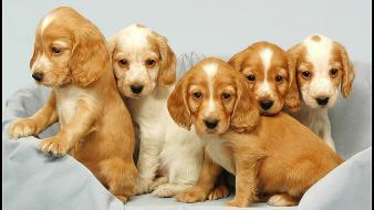 Dogs pets puppies wallpaper