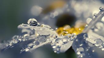 Flowers raindrops wallpaper