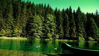 Forests green lakes nature wallpaper
