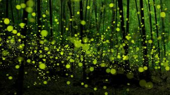 Japan bokeh fireflies forests landscapes wallpaper
