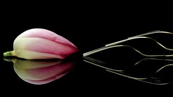 Lotus national geographic black background flowers forks wallpaper