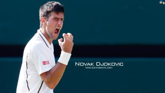 Novak djokovic sports tennis wallpaper
