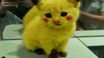 Pikachu youtube cats kittens pikacat wallpaper