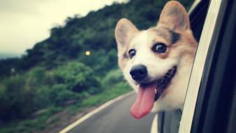 Animals dogs funny wallpaper