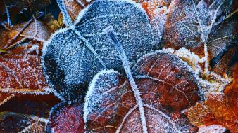 Autumn (season) leaves frost wallpaper