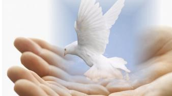 Birds doves hands wallpaper