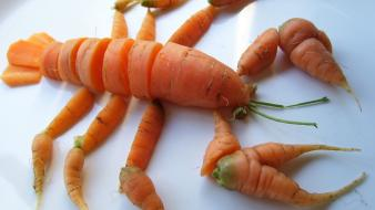 Carrots lobsters food art wallpaper