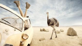 Cars desert rocks funny ostrich upside down wallpaper