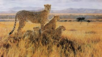 Cheetahs artwork master piece savanna wallpaper