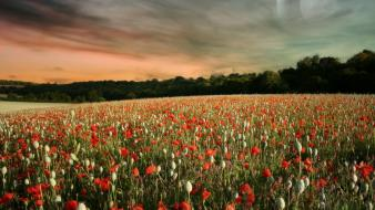 Landscapes flowers skyscapes wallpaper