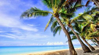Landscapes tropical palm trees wallpaper