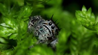 Nature leaves macro spiders jumping spider arachnids Wallpaper
