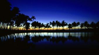 Palm silhouette big island hawaii wallpaper
