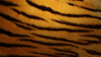Tiger Skin Wallpaper