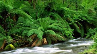 Yarra ranges national park australia wallpaper
