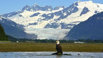 Alaska eagles landscapes mendenhall glacier mountains Wallpaper
