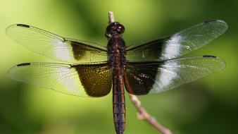 Animals dragonflies nature wallpaper