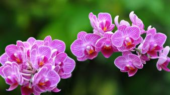 Close-up flowers orchids wallpaper