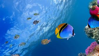 Coral fish ocean tropical underwater world wallpaper