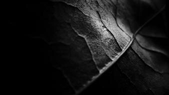 Dark leaves monochrome nature textures wallpaper