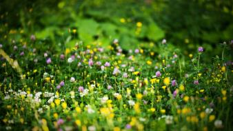 Depth of field flowers wildflowers wallpaper