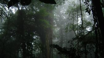 Fog forests jungle landscapes trees wallpaper