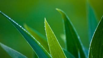 Green leaves macro nature plants wallpaper