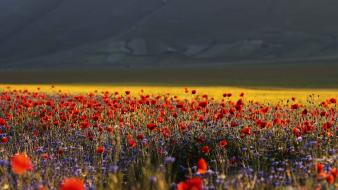 Italia italy flowers landscapes nature wallpaper