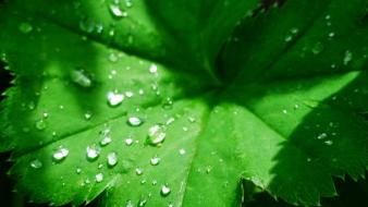 Leaves nature water drops wallpaper