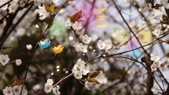 Smashing magazine birds cherry blossoms white flowers wallpaper