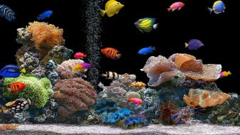 Animals aquarium coral nature saltwater fish wallpaper