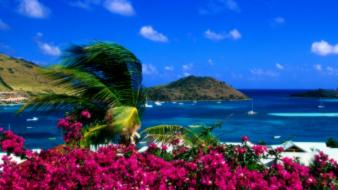 Beaches bougainvillea flowers landscapes palm trees wallpaper