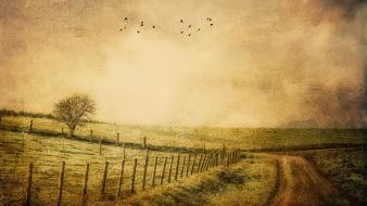 Grass nature old roads vintage wallpaper