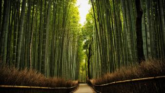 Kyoto bamboo forests nature temples wallpaper