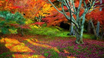 Leaves multicolor trees wallpaper