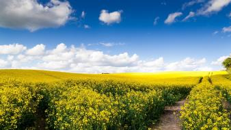 May clouds fields landscapes nature wallpaper
