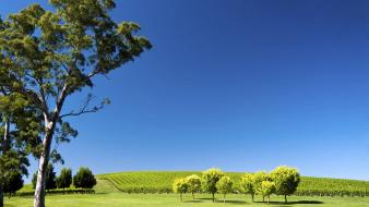 Hills landscapes nature south australia vineyard Wallpaper