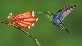 Ecuador birds flowers green hummingbirds wallpaper