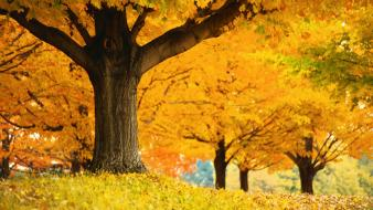 Autumn golden multicolor wallpaper