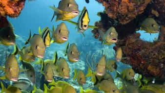 Coral reef fish sealife wallpaper