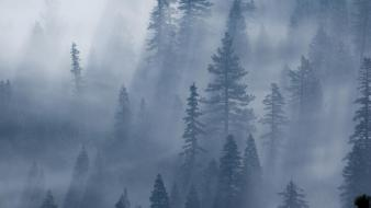 Fog forests mist trees wallpaper
