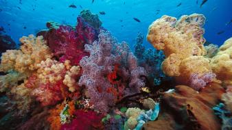 Indonesia coral fish scenic wallpaper