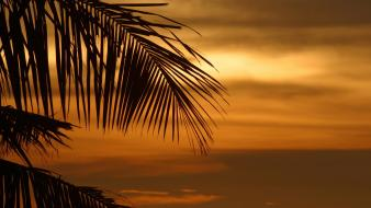 Palm leaves sunset trees tropical wallpaper