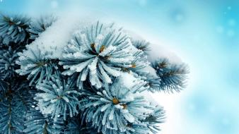 Blue frozen macro plants snow wallpaper