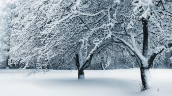 Cleveland ohio fallen snow wallpaper