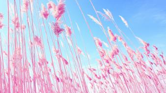 Dreamy grass macro nature pink wallpaper
