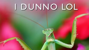 Funny mantis meme text wallpaper