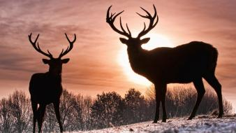 Sun animals deer silhouettes snow wallpaper