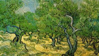 Vincent van gogh artwork paintings trees Wallpaper