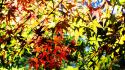 Autumn (season) leaves sunlight maple leaf branches wallpaper
